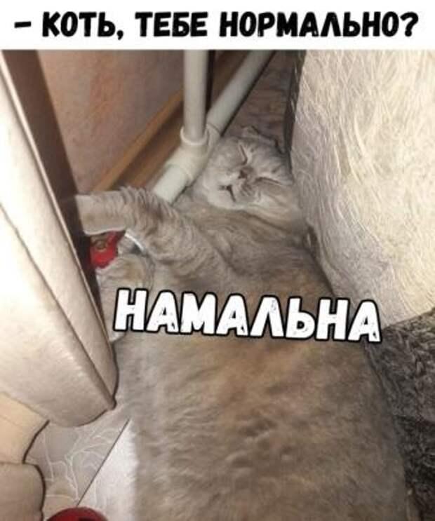 Забавные картинки и смешные фотографии с надписями из сети (12 фото)