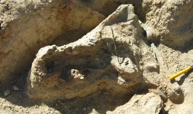 Палеонтологи обнаружили в Австралии череп неизвестной доисторической рептилии