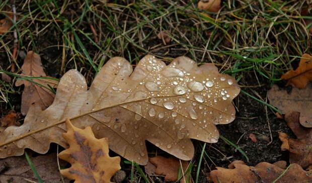 ВОмскую область придет дождь ипохолодание до+1 градуса