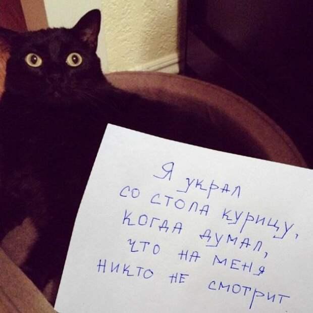 черный кот с запиской