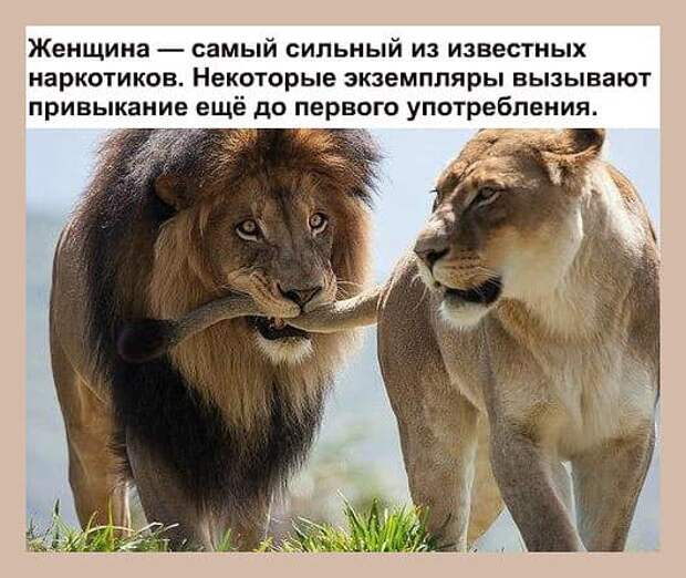 У истинного российского патриота должно быть...