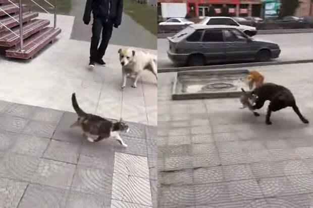 «Повадились»: храбрая кошка прогнала двух собак иудивила Сеть