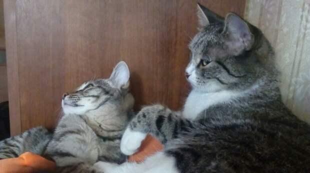 Котенок кинулся под ноги девушки, охрипшим голосом прося у нее помощи