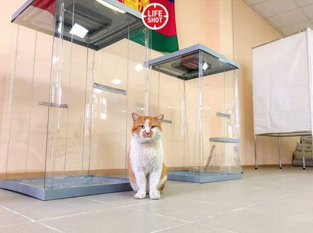Супермен, Чубакка и кот Мостик: кто голосовал на президентских выборах 18 марта