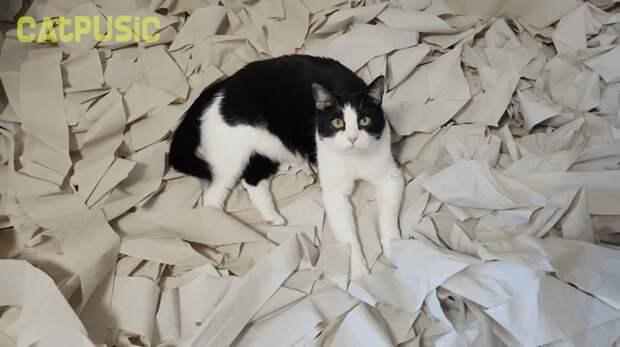 Кот явно доволен, а когда питомец доволен, то рады и хозяева! Пусик, бумага, видео, животные, кот, рулоны, хозяева