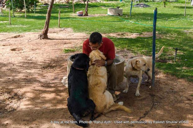 Обычный день в центре для собак. Фото: Rakesh Shukla.