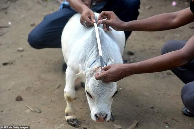 Чудо природы по имени Рани: самая маленькая коровка в мире