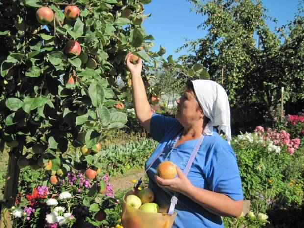 Время собирать плоды