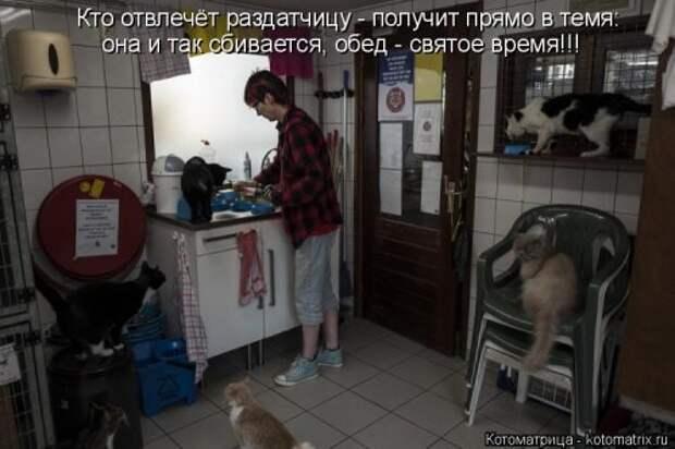 Котоматрица на Бугаге (29 фото)