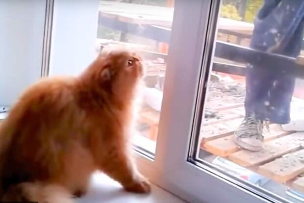 Кот - лучший охранник!