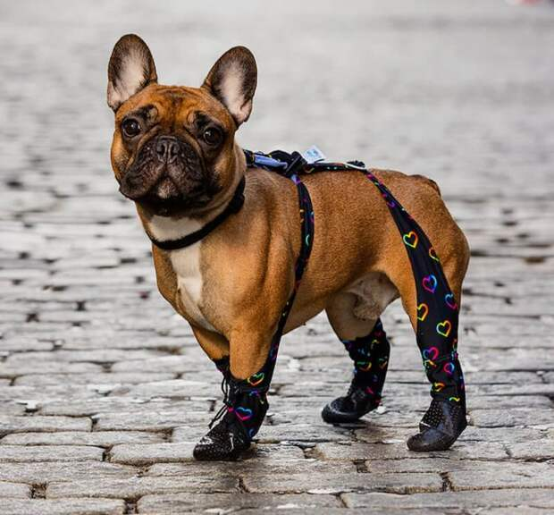 Последний писк моды: собачьи леггинсы