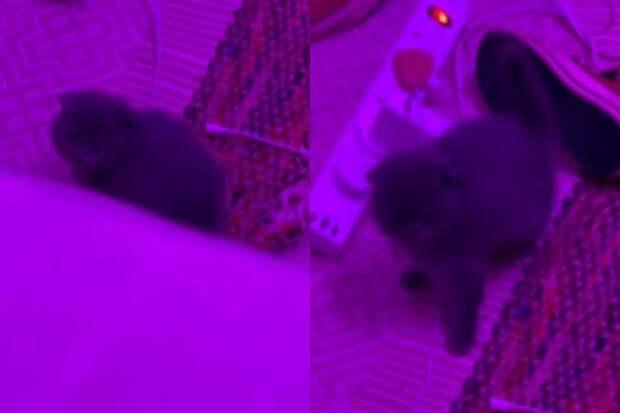 Красиво ушёл: свалившийся с кровати котёнок заставил соцсети хохотать
