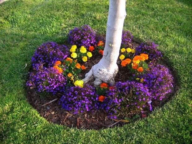Что можно посадить под деревом