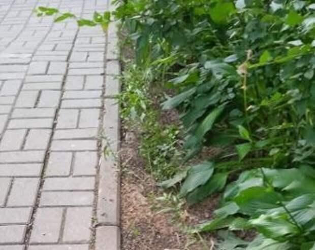 Придомовую территорию на Череповецкой привели в порядок – «Жилищник»