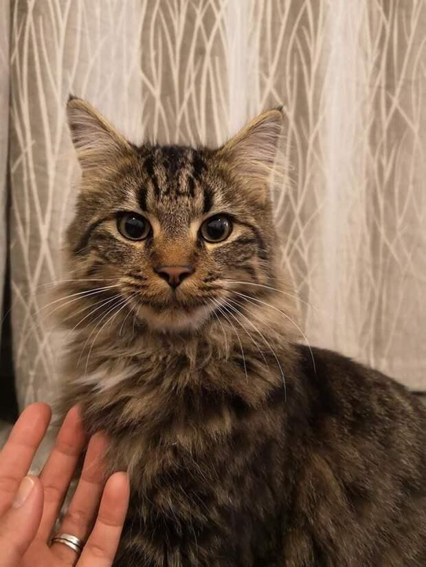Кот по кличке Гарри пропал, и его хозяйка сбилась с ног, пока его искала дерево, животные, застряли, история, кот, пожарный, спасение