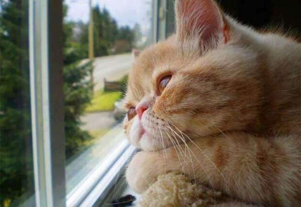 7236110-R3L8T8D-650-cat-waiting-window-65