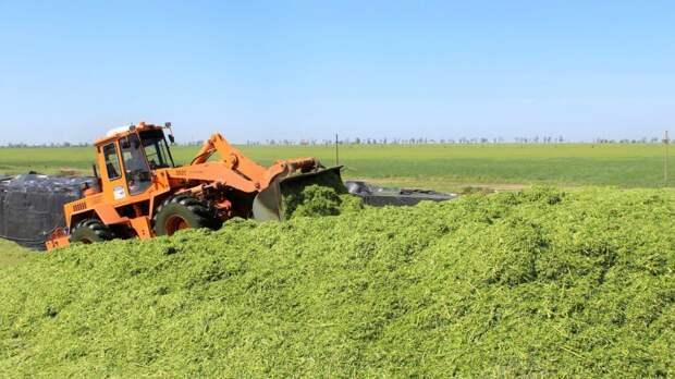 В Крыму планируют заготовить более 170 тысяч тонн кормовых единиц грубых и сочных кормов