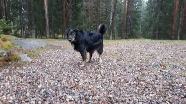 Застенчивый пёс прибился к стае бродячих собак, чтобы выжить