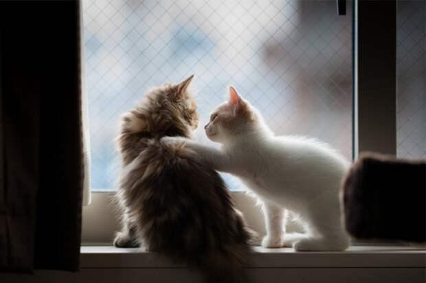 7238360-R3L8T8D-650-cat-waiting-window-68