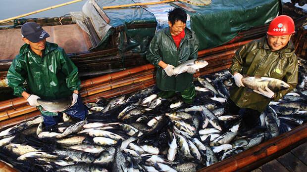 Попутали берега: Китай требует от России предоставить право на бесплатную рыбную ловлю
