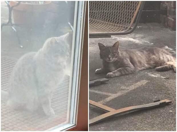 Убитая горем кошка целый год ждет умершую собаку грустная история, дружба животных, история, кошки, собаки, трогательно