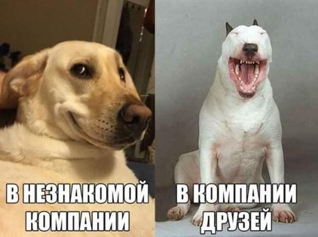 Смешные и познавательные картинки (48 фото)