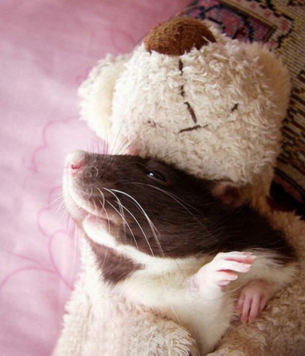 Крысята от фотографов Jessica Florence и Ellen van Deelen