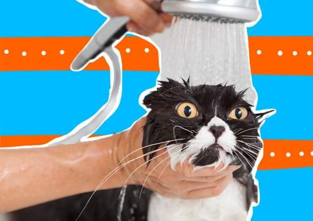 Как помыть кошку, если она боится воды?