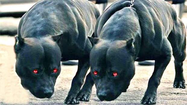 5 самых сильных собак в мире