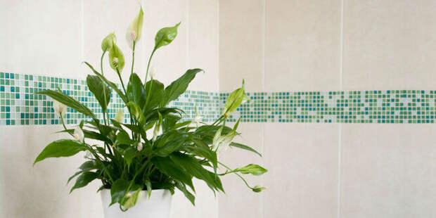 Цветы и растения, которые помогают хорошо спать
