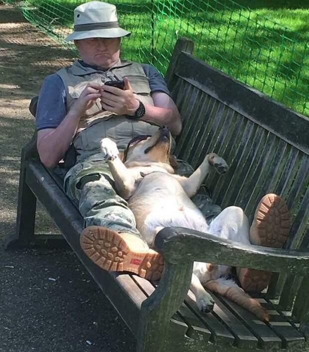 Собаки, которые без ума от своих хозяев