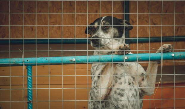 В Ясном начали отлавливать бродячих собак