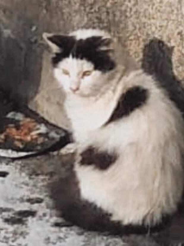 Женщина прямо высказала намерение избавиться от котов... Помогите, хотя бы временным пристройством.