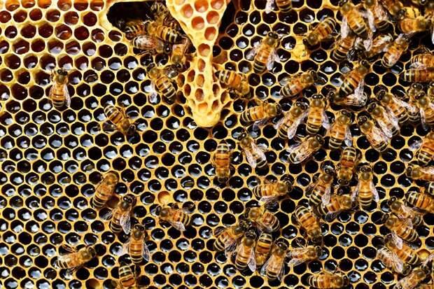 Как оборудовать улей в саду и можно ли вообще разводить пчел на даче?