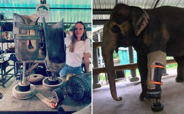 Доктор джунглей: ветеринар спасает слонов, потерявших конечности из-за мин