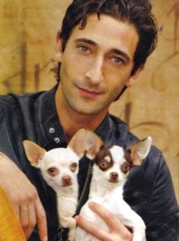 Любимые собаки звезд  собаки, щенки, звезды