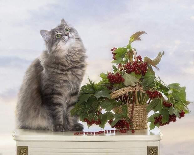 Сидела кошечка в окошке, встречала теплую весну. Натюрморты Ирины Приходько