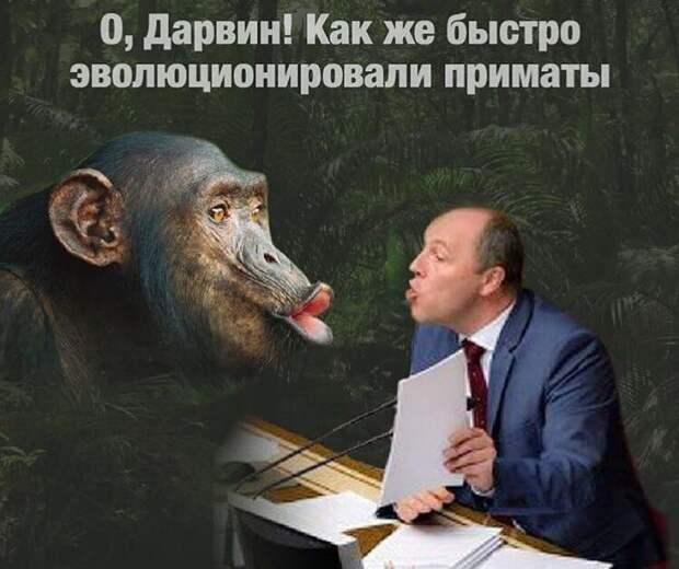 Возможно, это изображение (1 человек и текст «0, дарвин! как же быстро эволюционировали приматы»)