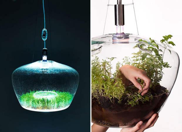 Теплица-светильник с живыми растениями.