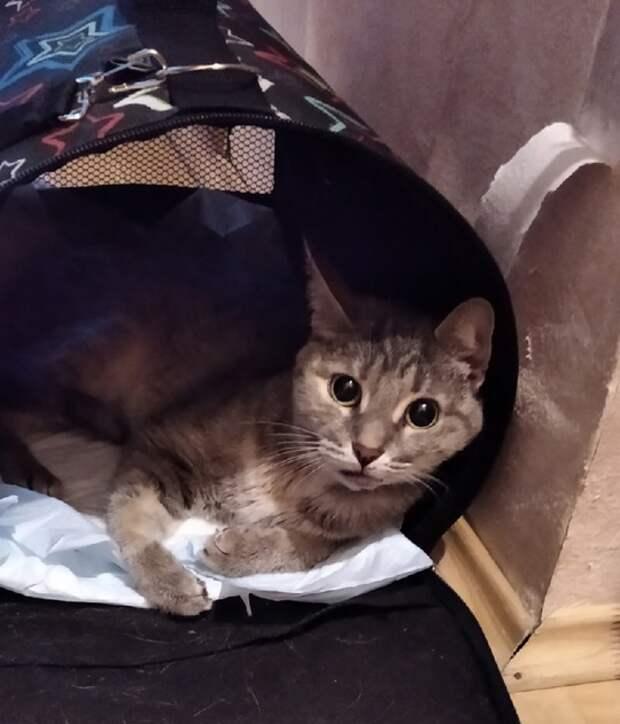 Девушка из Некрасовки не оставила кошку со сломанной лапой в беде
