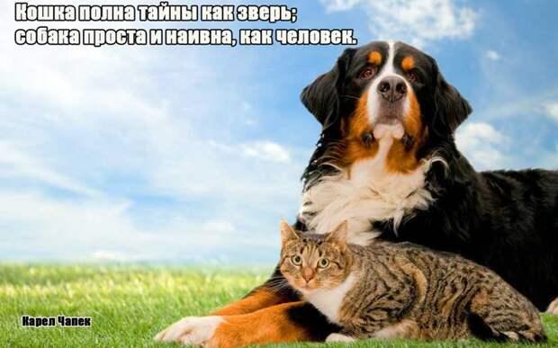 10.  афоризмы, животные, собаки