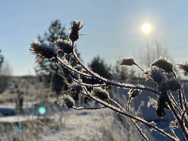К пятнице в Удмуртии станет теплее