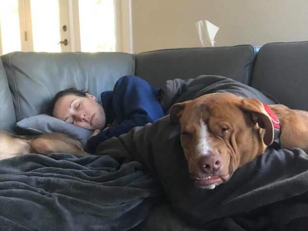 Несмотря на все свои страдания и искалеченную морду, это самых добродушный пес
