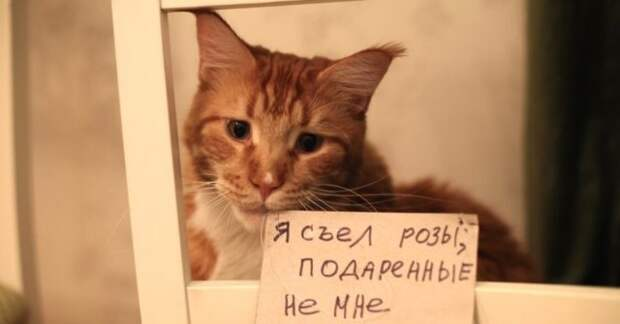 рыжий кот под табуретом