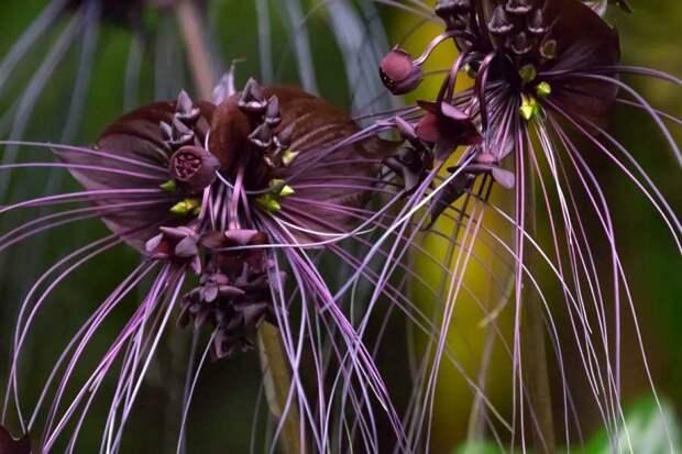 Самые необычные и удивительные растения мира, где их можно найти