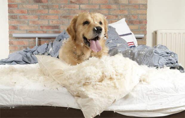 Как показать собаке, кто главный в доме