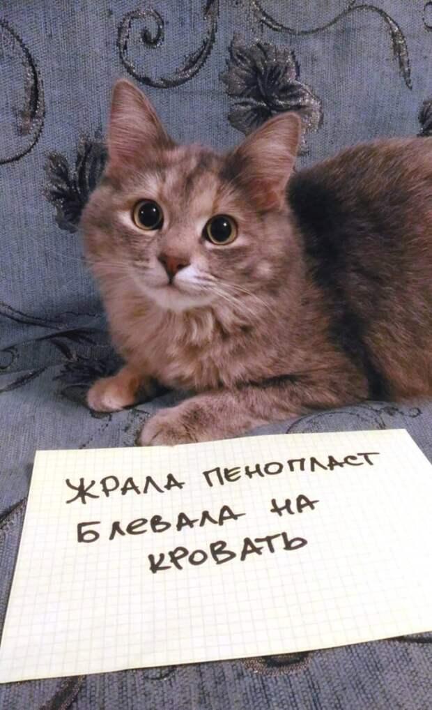 кошка сидит на диване с запиской