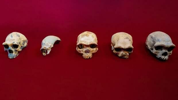 Человек-Дракон: археологи нашли ранее неизвестный вид Homo