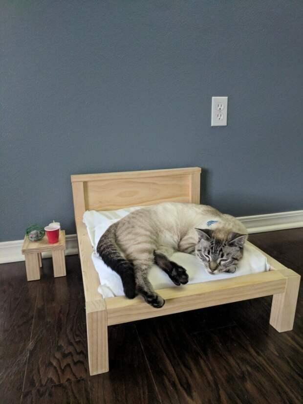 Крис самоучка и учился работать с деревом по роликам на YouTube домашние животные, коты, кровать, мебель для кошек, мебель из дерева, миниатюрная, самоделки, своими руками