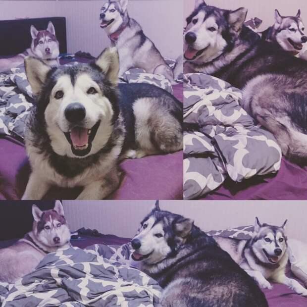 Любовь изменила до неузнаваемости больного пса, который всю жизнь провёл на цепи Любовь, в мире, добро, животные, забота, люди, собака, спасение